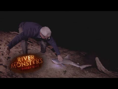Catching A Juvenile Bull Shark - River Monsters