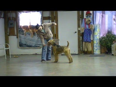 Teaching attitude adjustment among retired champion dogs