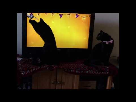 Cat loves Halloween mouse video!
