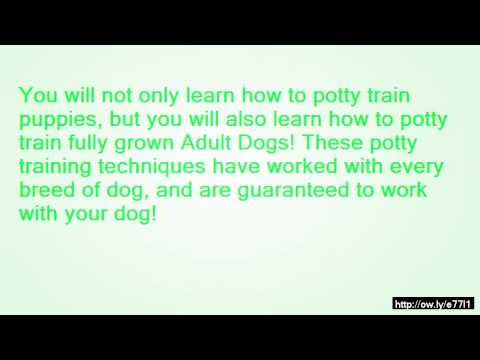how to train your dog to pee and poop in one spot