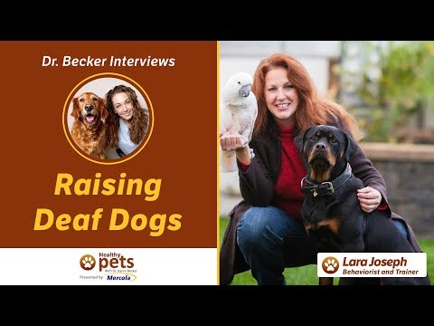 Dr. Becker Interviews Lara Joseph on Raising Deaf Dogs