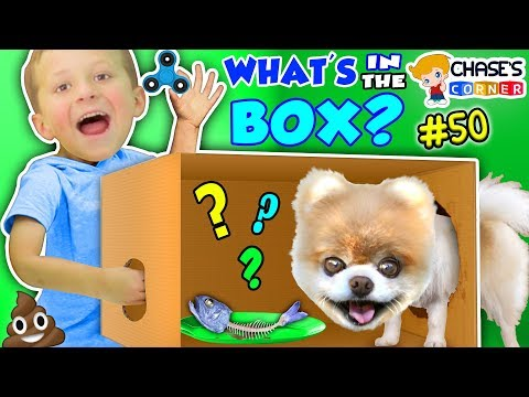 Chase's Corner: WHAT'S IN THE BOX? (#50   DOH MUCH FUN Challenge)