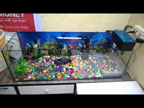 Aquarium Fish Tank Setup with Games Stone  Lovely Fishes and Baby turtle pair
