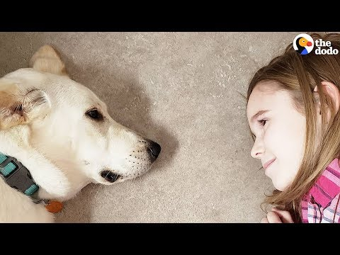 Xxx Mp4 Little Girls Decide To Save A Shelter Dog 39 S Life The Dodo 3gp Sex