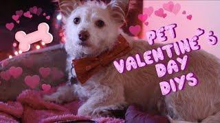 Pet Valentine's Day DIYs | No Sew Dog Toy, Bow Tie & Treats! 💕