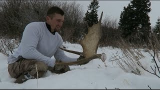 FIRST MOOSE SHEDS for 2017!!
