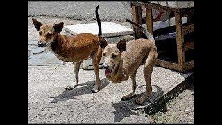 ऐसे जानवर जिनको आप पहली बार ही देखेंगे    5 MOST UNUSUAL ANIMALS AROUND THE WORLD
