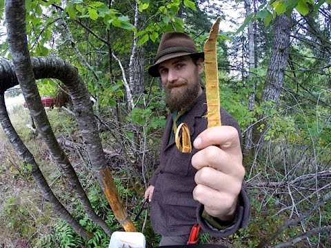 Wild Cherry Bark Medicine Harvesting with Yarrow Willard