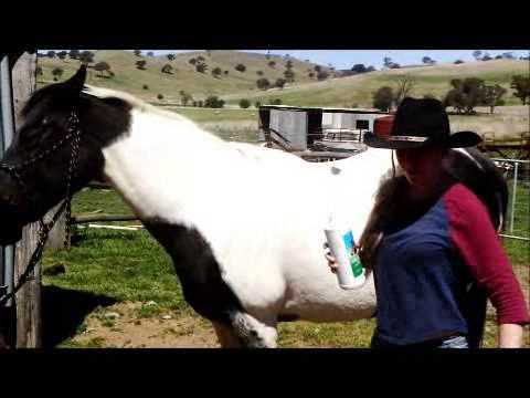 Treat a horse for external parasites