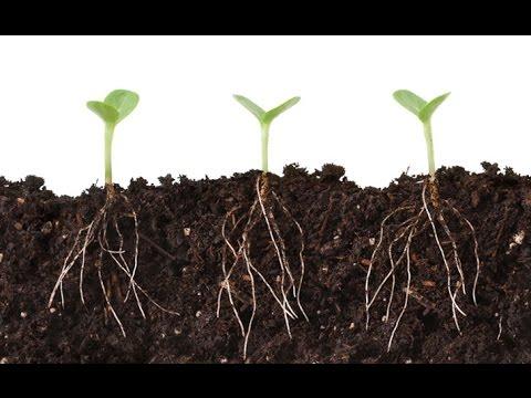 Does Mycorrhizal Fungi Aid Seed Germination | Day 1 💦