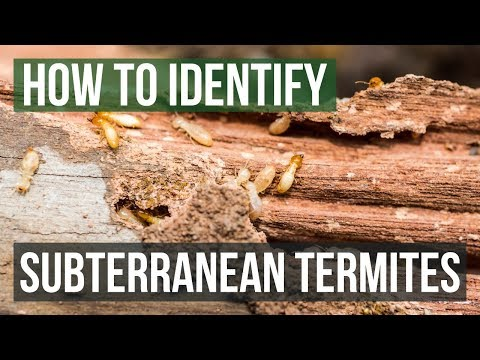 How to Tell If You Have Termites