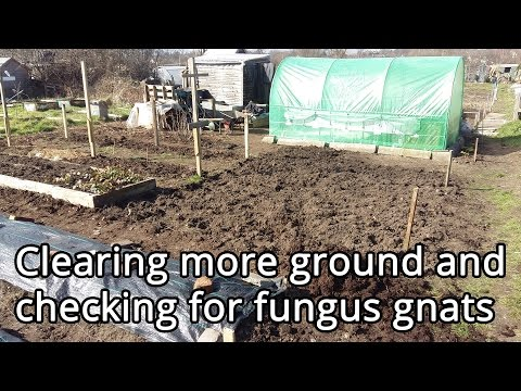Clearing more ground and checking for fungus gnats