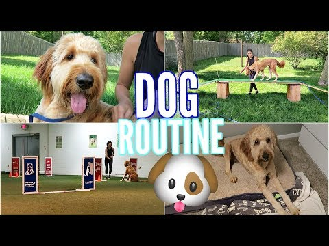 A DAY IN THE LIFE OF MY GOLDENDOODLE DUDE! AGILITY, TRAINING, NEW TOYS!