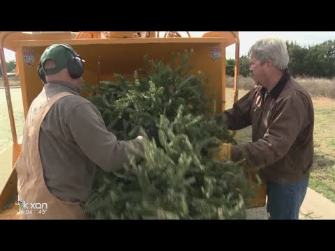Where you can recycle your Christmas tree in Austin