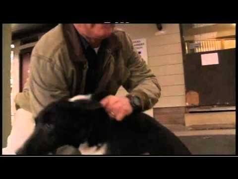 Steve Austin - Elite Dog Trainer