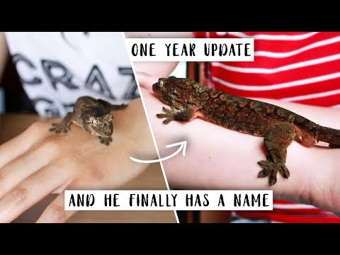 HIS NAME, AGE, HOW MUCH HE COST & LOTS MORE // Chahoua Update!