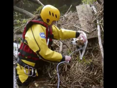 RSPCA Video - Montage of our work