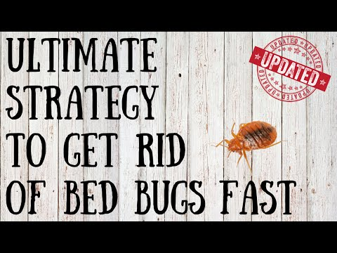 How To Get Rid Of Bed Bugs Yourself Quick Tips For Killing Bed Bugs N