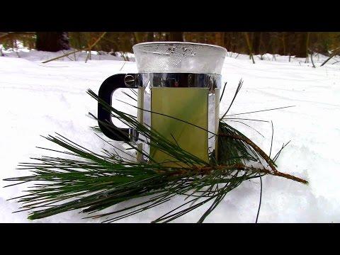 Wild Edibles- Pine Needle Tea
