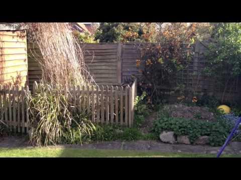 Amazing garden pond makeover - Norwich, UK
