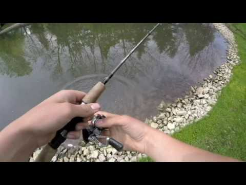 Fishing a small pond for bass, crappie and big hybrid bluegill