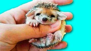 10 МИЛЕЙШИХ ДЕТЕЙ ЖИВОТНЫХ / 10 beautiful baby animals