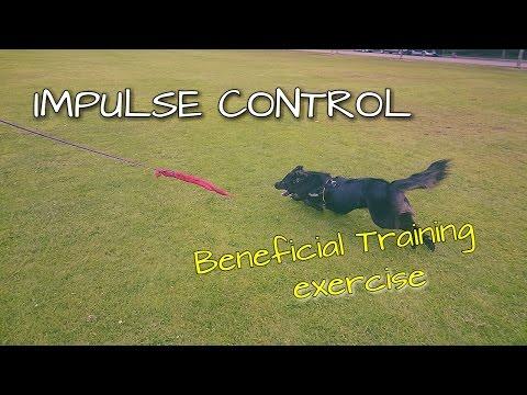 Impulse Control Training - Flirt Pole Fun with Your Dog