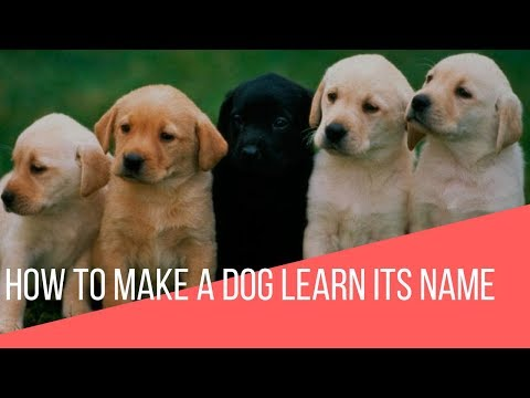 How To Make a Dog Learn Its Name
