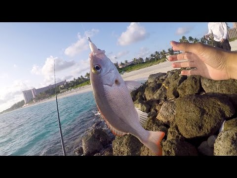 Saltwater Fishing gets me HYPED!!! Beach Fishing in the Bahamas