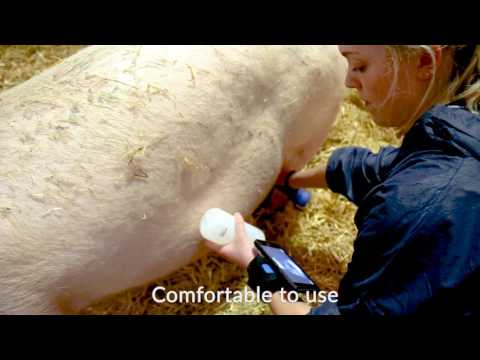 Duo-Scan:Go ultrasound pig pregnancy kit