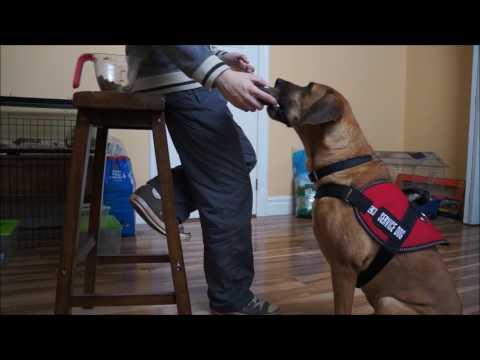 Service Dog Training #1 - Retrieving Items