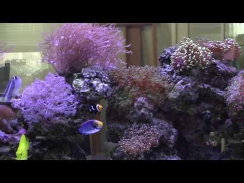 Martee & Calee's 125-reef