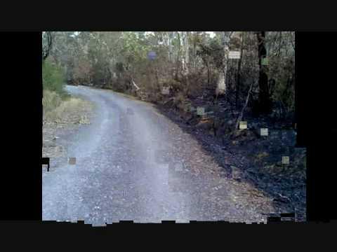 Ruku tree direction video.wmv