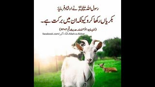 Bakshi goat farm beautiful kids   Music Jinni