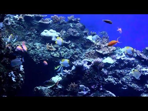 The Waikiki Aquarium