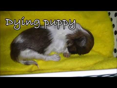 Miracles Happen Everyday at Doggieland Video 2