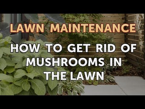 How to Get Rid of Mushrooms in the Lawn