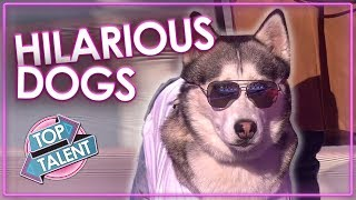 FUNNIEST DOG AUDITIONS & MOMENTS EVER on Britain