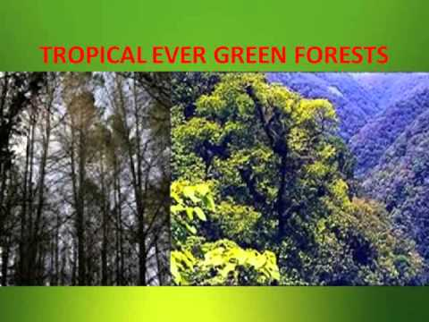 wildlife and forest presentation ppt file