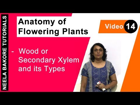 Anatomy of Flowering Plants - Wood or Secondary Xylem and its Types
