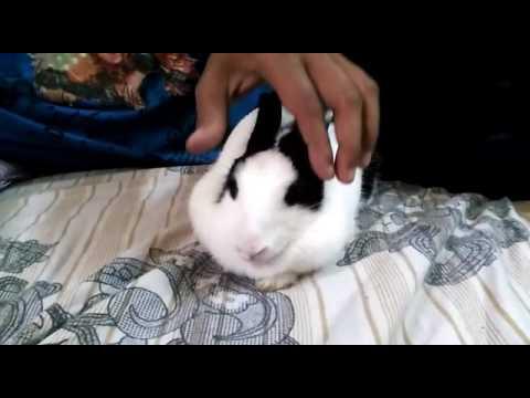 how to make your rabbit sleep