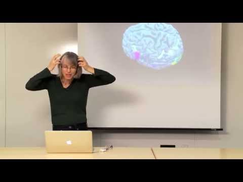 The Neuroanatomy Lesson