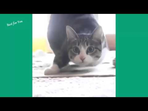 Funny Cats Vine Compilation