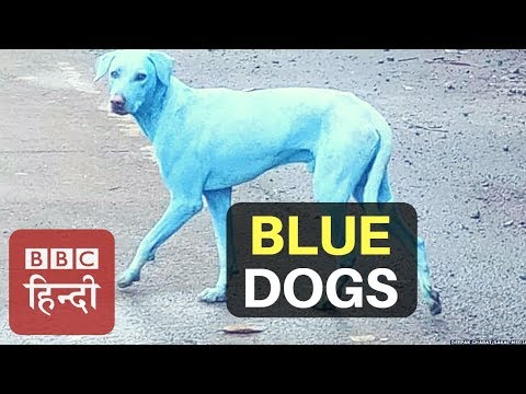 Xxx Mp4 Have You Seen Blue Dog Before BBC Hindi 3gp Sex