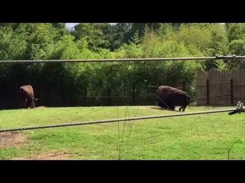 Zoo! (part1)