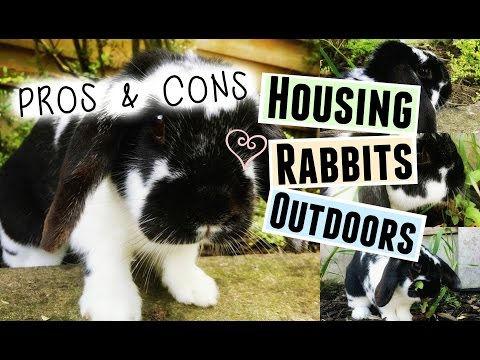 PROS & CONS: Housing Your Rabbits Outdoors | RosieBunneh