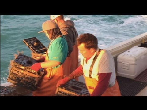 Stone crabbers struggle to bring in catches, low prices