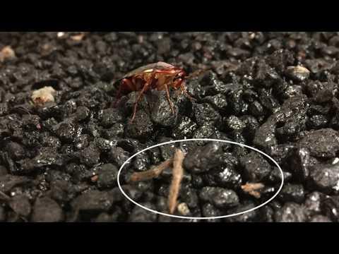 Roach Eats Spider