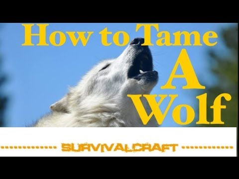Survival Craft ep 9 ~ How to Tame a Wolf