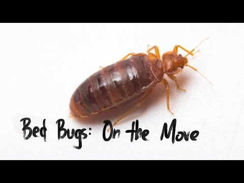 Bed Bugs on the Move